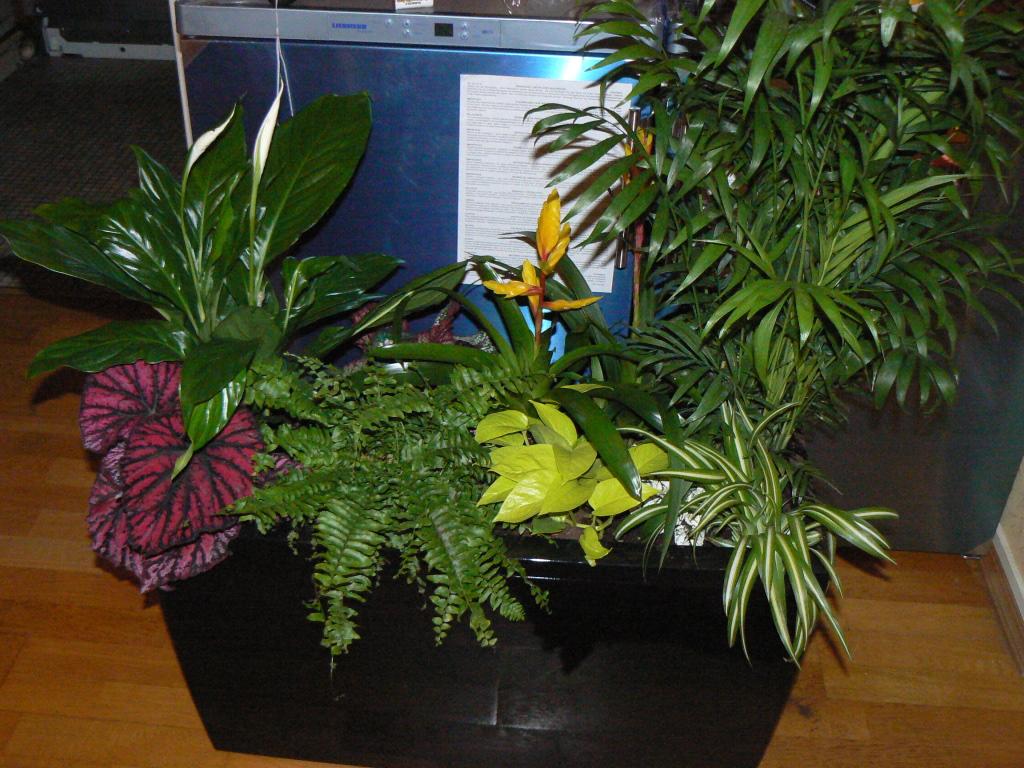 plantes d 39 int rieur et plantations. Black Bedroom Furniture Sets. Home Design Ideas
